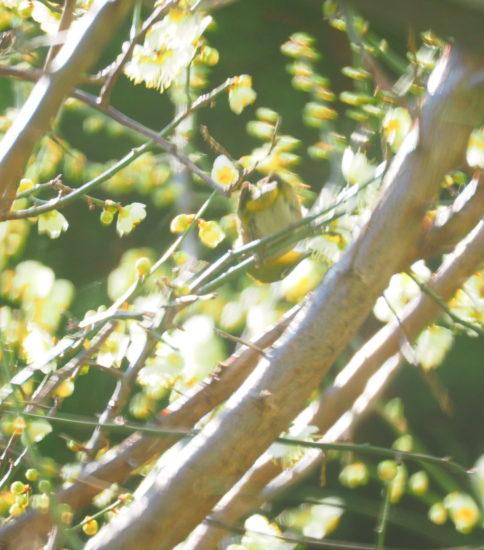 スギ花粉が飛び始めました